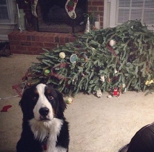 oops-tree