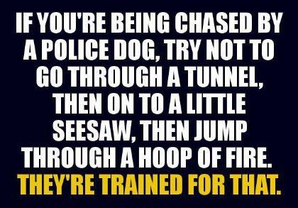 if-youre-being-chased-by-a-police-dog
